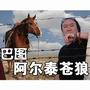 巴图的专辑 阿尔泰苍狼(单曲)
