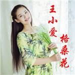 王小爱的专辑 格桑花